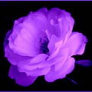 Bright Purple Perfection Art Print