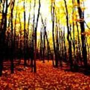 Bright Woods Art Print