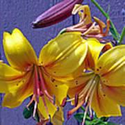 Bright Yellow Lilies Art Print