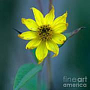Bright Yellow Wildflower Art Print