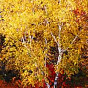 Brilliance Of Autumn On Rib Mountain Art Print
