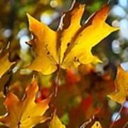 Brilliant Autumn Light And Color Art Print