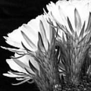 Brilliant Blossoms Diptych Left Art Print
