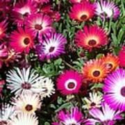 Brilliant Flowers Art Print