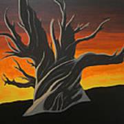 Bristle Cone Pine At Dusk Art Print