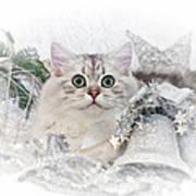 British Longhair Cat Christmas Time II Art Print by Melanie Viola