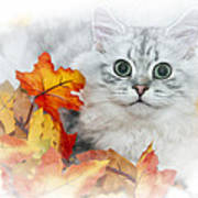 British Longhair Cat Art Print