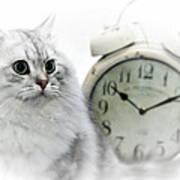 British Longhair Cat Time Goes By II Art Print