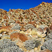Brittlebush Leaves And Santa Rosa Mountains From Borrego Palm Canyon In Anza-borrego Desert Sp-ca Art Print