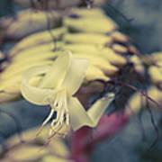 Bromeliaceae - Alcantarea Geniculata Art Print