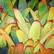 Bromeliads I Art Print