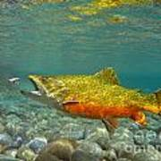 Brook Trout And Royal Coachman Art Print