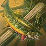 Brook Trout  Hideaway Art Print