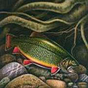 Brook Trout Lair Art Print by JQ Licensing