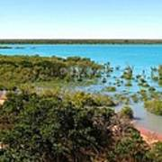 Broome Mangroves Art Print