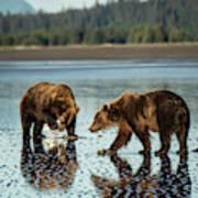 Brown Bear, Ursus Arctos, Walking Art Print