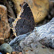 Brown Butterfly Cuyahoga Valley Art Print