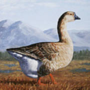 Brown Chinese Goose Print by Crista Forest