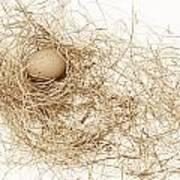 Brown Egg In Bird Nest Sepia Art Print