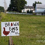 Brown Eggs Art Print