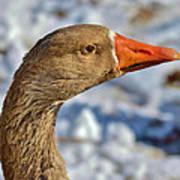 Brown Goose Art Print by Thomas  MacPherson Jr