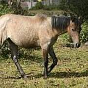 Brown Horse Walking Through A Pasture Art Print