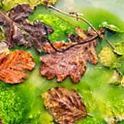 Brown Leaves In Green Pond Art Print