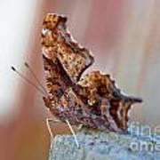Brown Paper Moth Art Print