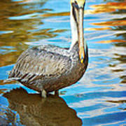 Brown Pelican Along The Bayou Art Print