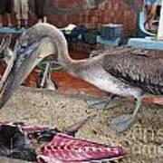 Brown Pelican At The Fish Market Art Print