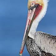 Brown Pelican Head Shot Art Print