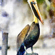 Brown Pelican Art Print by Lester Phipps