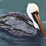 Brown Pelican On Water Art Print