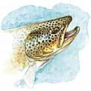 Brown Trout Study Art Print
