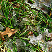 Brownleafsnowgrasscomp 2009 Art Print