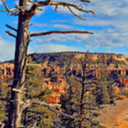 Bryce Canyon Cliff Tree Art Print