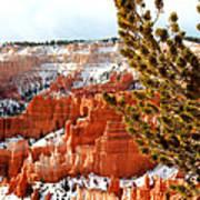 Bryce Canyon Pine Side Art Print