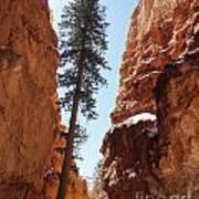 Bryce Canyon Wall Street Art Print