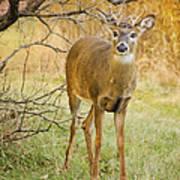 Buck In The Brush Art Print