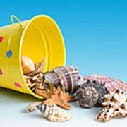 Bucket Of Seashells Still Life Print by Tom Mc Nemar