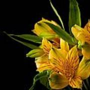 Budding Flowers Art Print