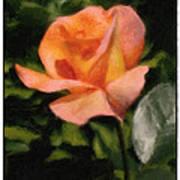 Budding Rose Art Print