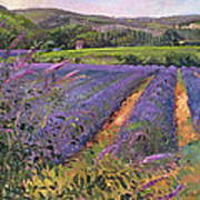 Buddleia And Lavender Field Montclus Art Print
