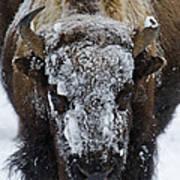 Buffalo #0057 Art Print