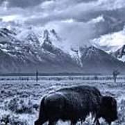 Buffalo And Mountain In Jackson Hole Art Print