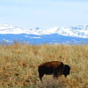 Buffalo And The Rocky Mountains Art Print