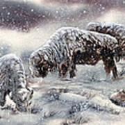 Buffalo In Snow Art Print