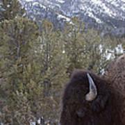 Buffalo In The Mountain   #4169 Art Print