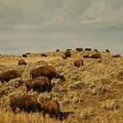 Buffalo On The Prairie Art Print