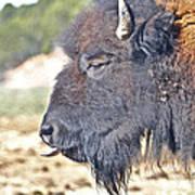 Buffalo Tongue Art Print
